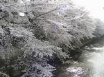 石神井川4
